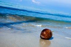 椰子异乎寻常的果子 免版税库存图片