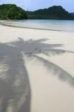 椰子影子 库存照片