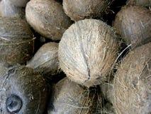 椰子新鲜的美丽的长毛的整个庄稼 库存图片