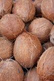 椰子有机鲜美 库存图片