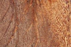 椰子木头 免版税库存图片