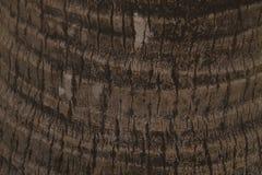 椰子木头 免版税库存照片