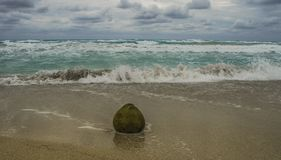 椰子果子在沙子说谎和由海洋洗涤 免版税库存图片