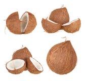 椰子果子 图库摄影