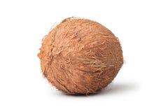 椰子查出的白色 免版税库存图片