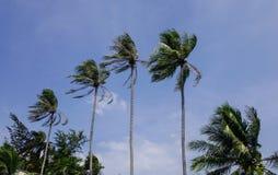 椰子树上面在蓝天下 免版税图库摄影