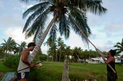 椰子树农业在Aitutaki盐水湖库克群岛 免版税库存照片