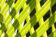 椰子树叶子 免版税库存图片