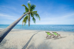 椰子树和两轻便折叠躺椅热带豪华海滩夏天天堂概念 免版税库存图片
