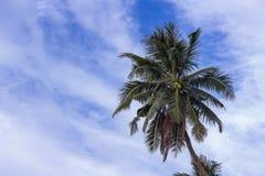 椰子树和天空背景 免版税库存图片
