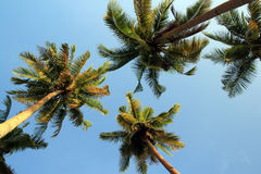 椰子树和天空 免版税库存图片