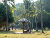 椰子树和庭院 图库摄影