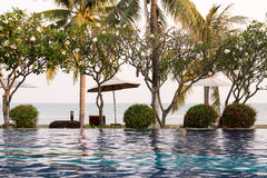 椰子树和椅子在室外游泳池附近在旅馆res里 图库摄影