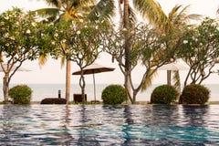 椰子树和椅子在室外游泳池附近在旅馆res里 免版税库存图片