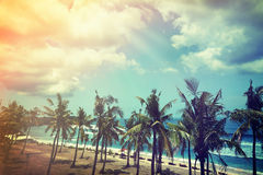 椰子树和海滩木床在白色沙子与美丽 免版税库存图片