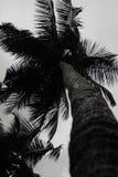 椰子树在喀拉拉 库存照片