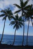椰子树在夏威夷 免版税库存照片
