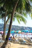 椰子树在普吉岛 库存照片