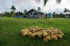 椰子树在Aitutaki盐水湖库克群岛 库存照片