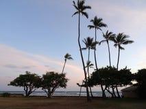 椰子树垂悬在沿峭壁岸的石道路在sha旁边 免版税库存照片