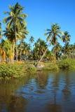 椰子树庭院 免版税库存图片