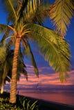 椰子树日落萨尼亚海南瓷 免版税图库摄影