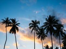 椰子树有在日落时间的金黄云彩背景 免版税库存照片