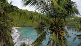 椰子树有tosca海滩色的背景 图库摄影