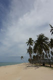 椰子树树丛  库存图片