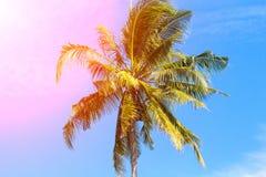 椰子树树在桃红色阳光下 与掌上型计算机的热带横向 在蓝天的棕榈树冠 免版税库存图片