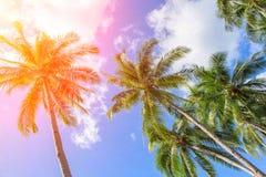 椰子树树在橙色阳光下 与掌上型计算机的热带横向 库存照片