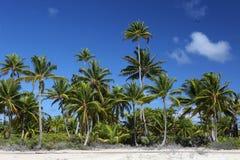 椰子树森林 免版税库存照片