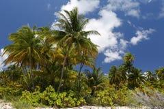 椰子树森林 免版税图库摄影