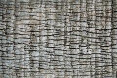 椰子树纹理 图库摄影