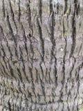 椰子树背景 免版税库存照片