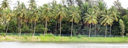椰子树链子 免版税图库摄影