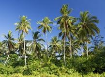 椰子树, Sematan海滩 免版税库存照片