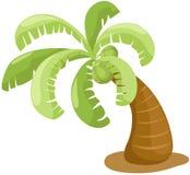 椰子树 库存照片