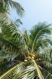 椰子树 图库摄影