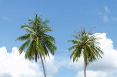 椰子树 库存图片