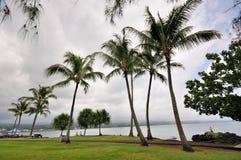 椰子树 免版税库存图片