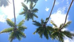 椰子树Playa Corcega史特拉,波多黎各日落 免版税库存图片