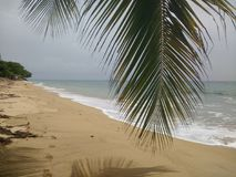 椰子树Playa Corcega史特拉,波多黎各日落 库存照片