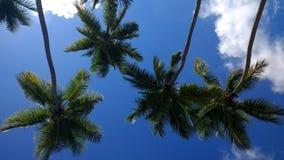 椰子树Playa Corcega史特拉,波多黎各 免版税库存图片