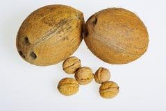 椰子核桃 免版税库存图片