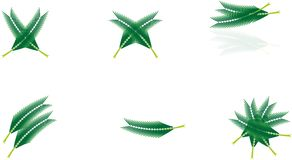 椰子棕榈叶 免版税库存照片
