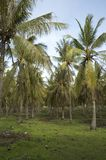 椰子森林掌上型计算机 库存照片