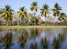 椰子水库结构树 图库摄影