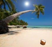 椰子海滩 免版税库存图片