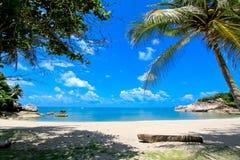椰子海滩 免版税库存照片